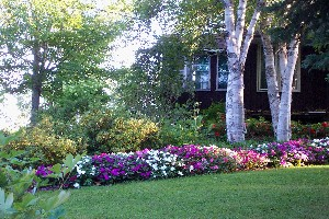 Impatiens at front of house...evening 2003